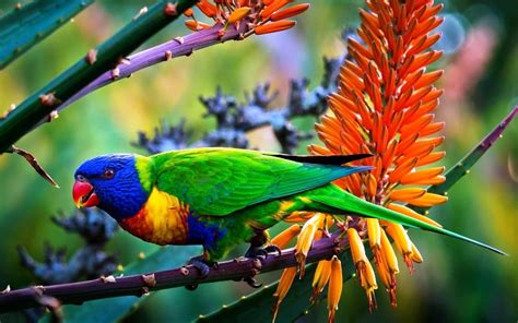 Colorful Birds Wallpaper Hd | colorful parrot bird hd wallpapers large hd wallpapers
