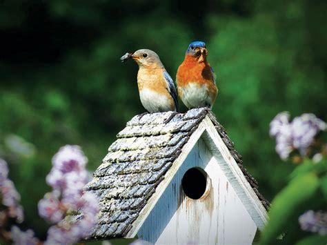 sparrow resistant bluebird house plans bluebird house plans maine