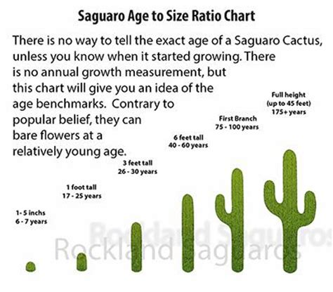 saguaro cactus diagram earth s networking august 2016