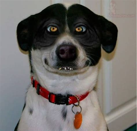 creepy dogs creepy smile quotes facts pictures and funhuh