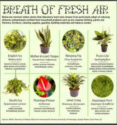 top 30 plants to detox your home tommy sotomayor