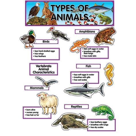 Small Animals Type C types of animals mini bulletin board set ctp1763 creative teaching press bulletin board