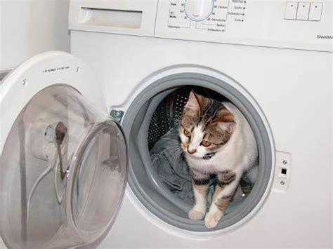 katzenhaltung in der wohnung miezekatzen aufgepasst die top gefahrenquellen in der wohnung