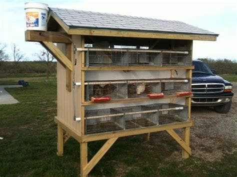 Quail Housing Plans Best 25 Quail Coop Ideas On Quail Raising