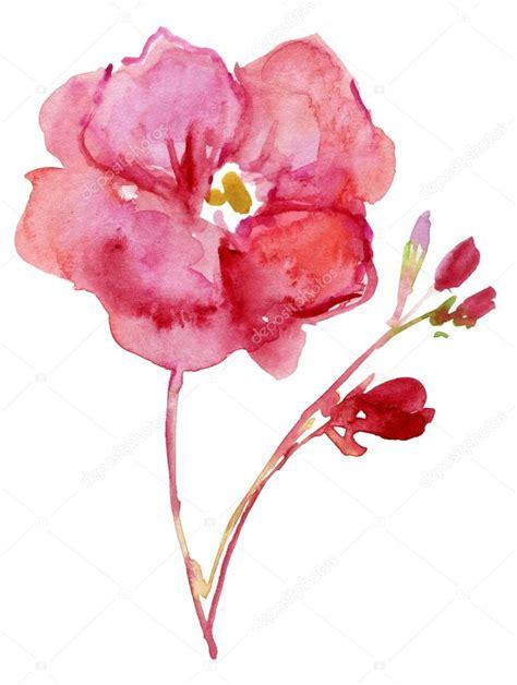fiori di oleandro fiori di oleandro dell acquerello foto stock 169 olies