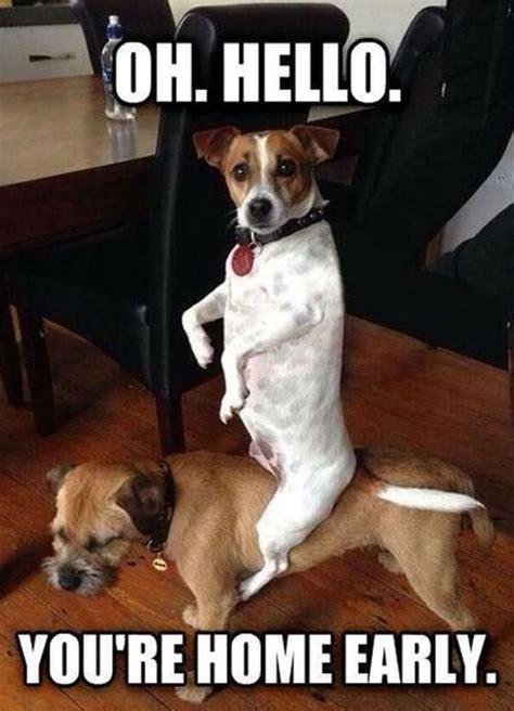 Oh You Dog Meme - 25 dog meme that will definitely brighten your day