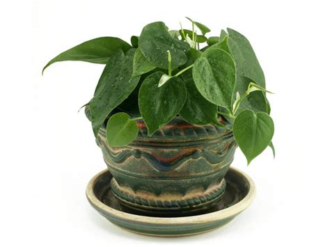 mini house plants small indoor plants to decorate house boldsky com