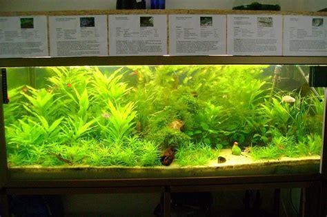 Aquarium Ohne Pflanzen Einrichten 6848 by Mein 300l Becken Nach Der Umgestaltung Aquarium Forum