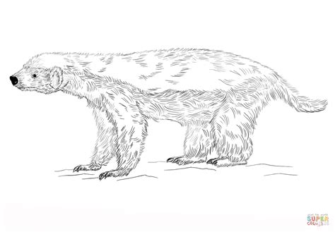 honey badger coloring page free printable coloring pages
