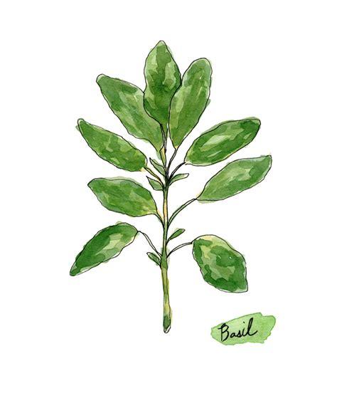 free printable herb poster watercolor herbs print set no 1 botanical prints giclee