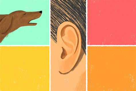 barking nyc how to be mindful with a barking the new york times