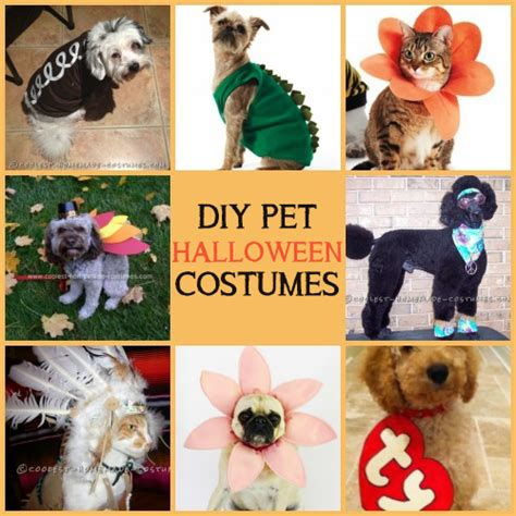 easy homemade pet halloween costumes   minute dog