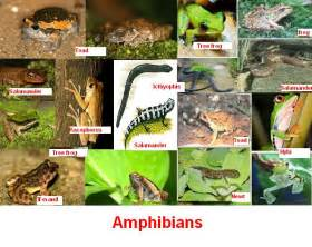 Types Of Freshwater Tropical Fish Aquarium likewise Vertebrate And