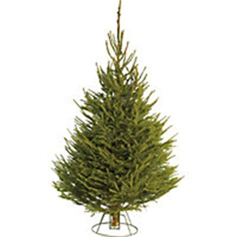 real christmas trees for your home for sale at homebase