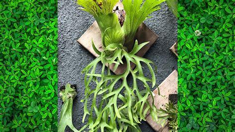 jenis jenis tanaman hias  bisa kamu tanam sendiri