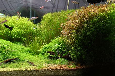 aquascape gallery aquascape gallery quot my my story quot