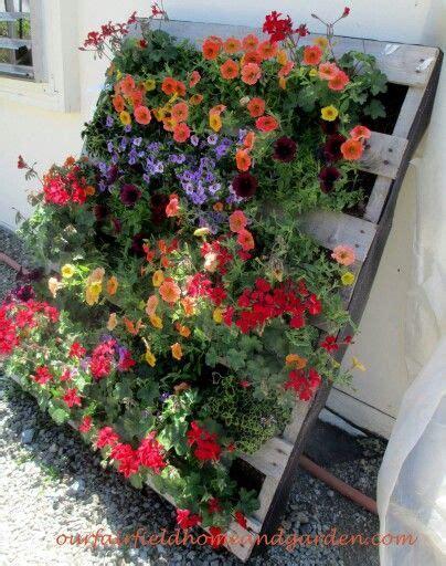 piante da cortile oltre 25 fantastiche idee su piante per cortile su