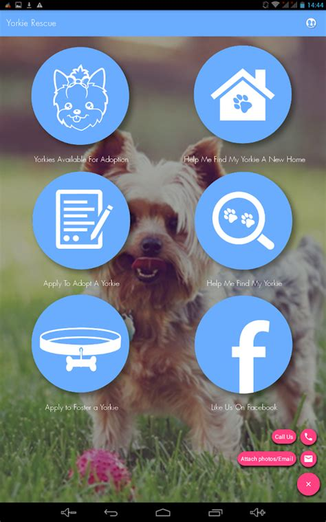 paws yorkie rescue sa yorkie rescue android apps on play
