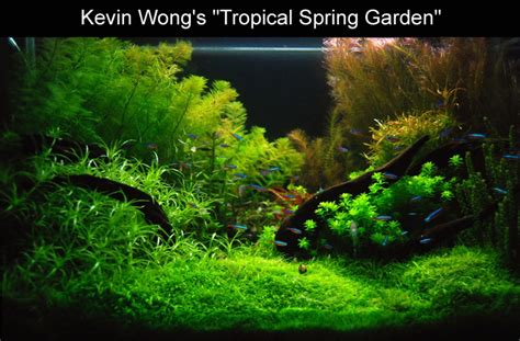 aquascape ideas tropical bubbles aquarium aquascapes