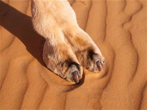 camel toeing cute or not cute toe the line