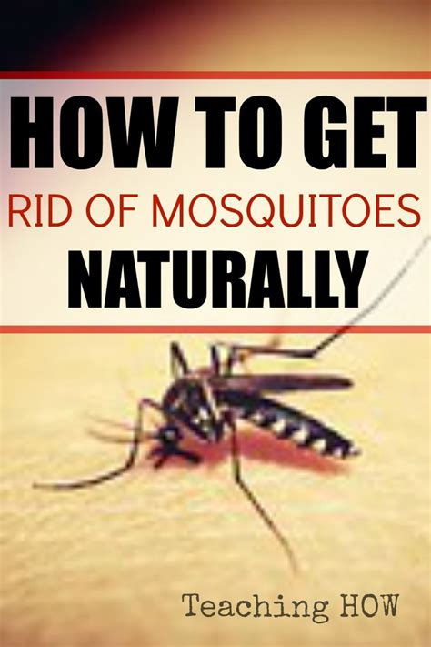 how to get rid of mosquitoes naturally 17 best images about stuff to buy on pinterest high