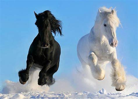colores de cabellos bonitos los caballos