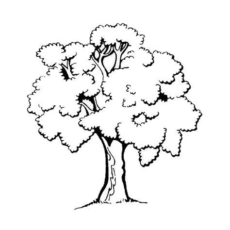 tree to color trees to print for free trees coloring pages