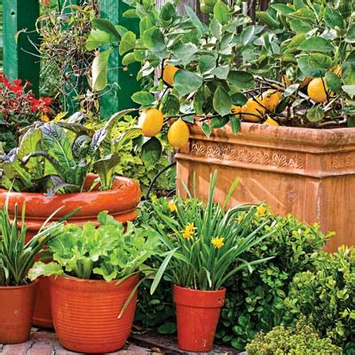 Vegetable Garden In Pots by A Small Space Harvest Pot Up Fruits And Vegetables Now