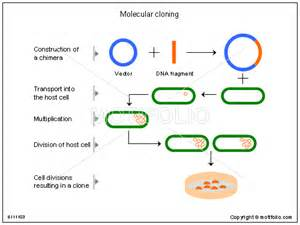 molecular cloning ppt powerpoint drawing diagrams