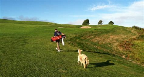 Armchair Golf by Armchair Golf Tiger The Goat Impresses At Top Ranked