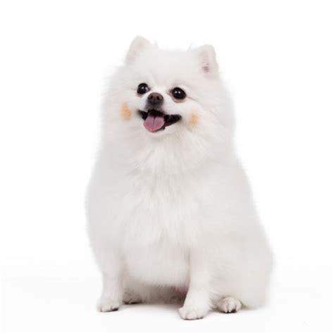 imagenes animales pequeños los perros m 225 s bonitos lista completa