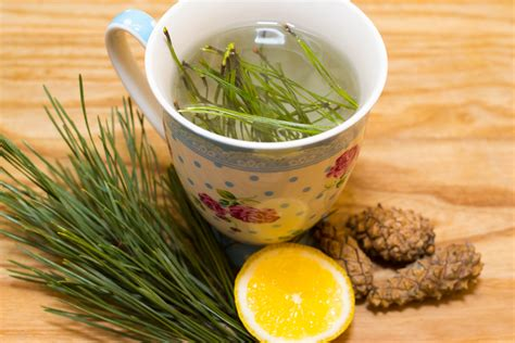 tea pictures how to make pine needle tea 7 steps with pictures wikihow