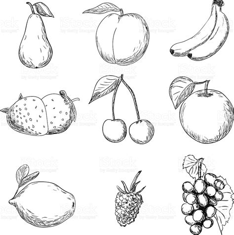 fruit drawings fruits drawing stock vector more images of apple