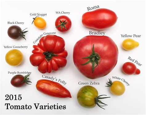 Mini Bell Tomato Seed tomato and pepper varieties 2016 gapey s grub