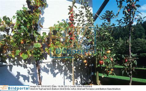 obst balkon details zu 0003161852 obst im topf auf dem balkon obst