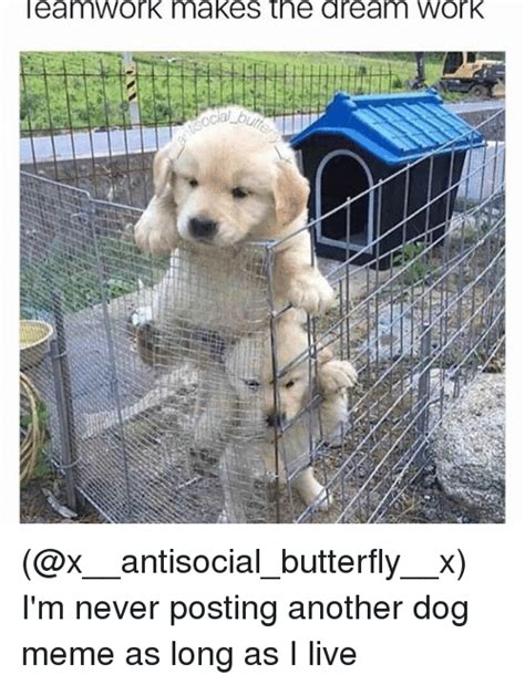 Puppy Meme - eamwork makes the dream work i m never posting another dog