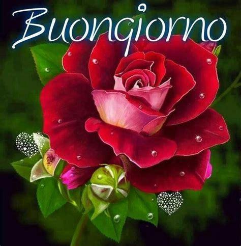 frasi di fiori immagini buongiorno con i fiori bellissimeimmagini it