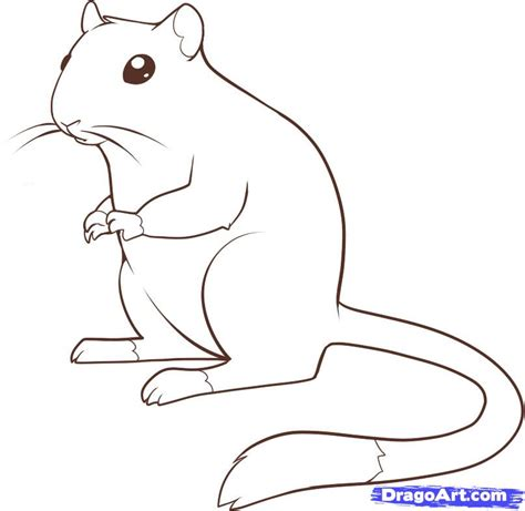 how to draw a gerbil step by step pets animals free