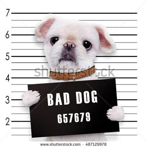 bad dogs mugshot wanted holding banner stock photo 133918412