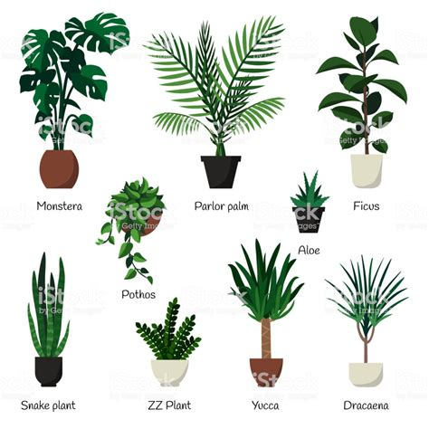 vector isolated set various indoor ornamental plants with names most common and popular