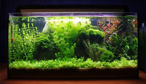 Best Low Light Aquarium Plants how my 54 litre low tech walstad aquarium looks like