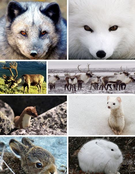 animals that change color 7 color changing wonders of the animal kingdom webecoist