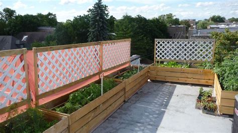orto in terrazzo vasi orto in balcone giardino in terrazzo come realizzare