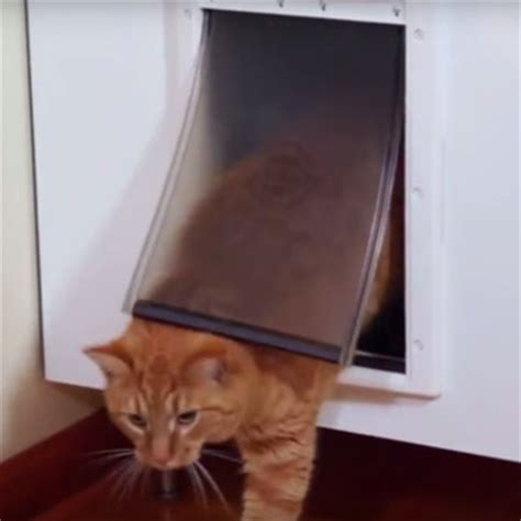 cat bathroom door how to keep dogs cats away from each other s food