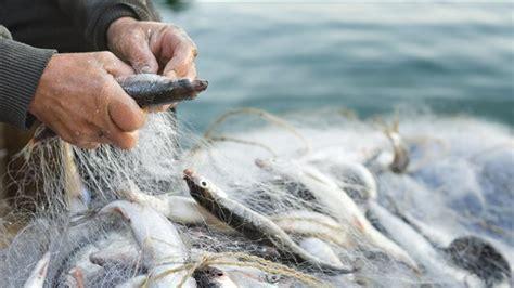 sedere a pesca 201 tudes sur les populations de poissons 233 es en ontario