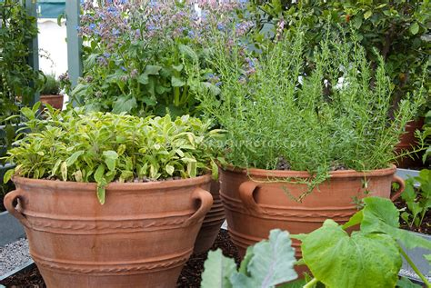 Herb Garden Planter Container by Clay Pot Herb Garden Plant Flower Stock Photography