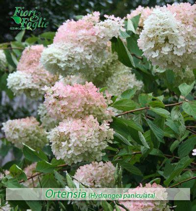 fiori nome come si chiama diamo un nome a fiori e piante 1 fiori