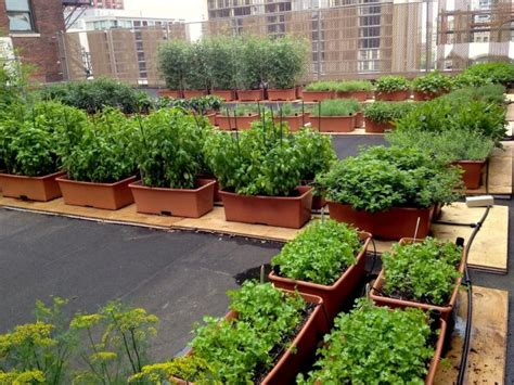 Rooftop Vegetable Garden Ideas 103 Best Images About Rooftop Gardening On Pinterest Gardens Green Roofs And Terrace