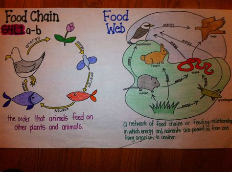 Food Webs On Pinterest Food Chains Science And Food | best 25 food webs ideas on pinterest ecosystems 4th
