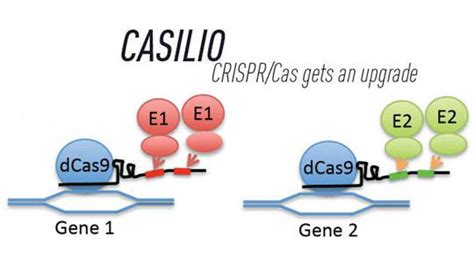 precision medicine crispr and genome engineering moving from association to biology and therapeutics advances in experimental medicine and biology books crispr cas9 a mechanism goes to work